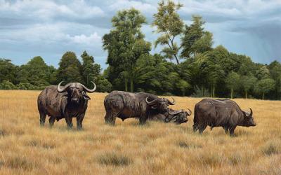 Masai Mara Cape Buffaloes