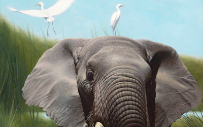 Elephants with Egrets