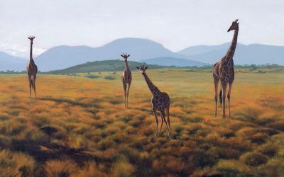 Lewa Giraffes