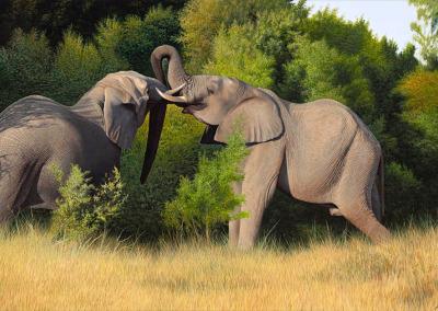 Wildlife/Animals