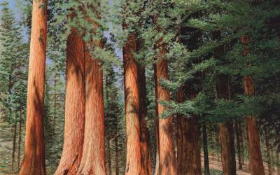 Yosmemite Sequoias